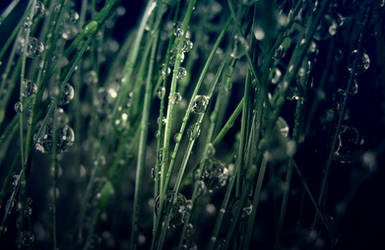 Raindrops [2] by rachel93
