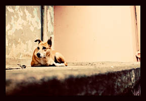 dog on the sill by abhimanyughoshal