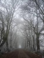Park Winter by la-Structure-du-Ciel