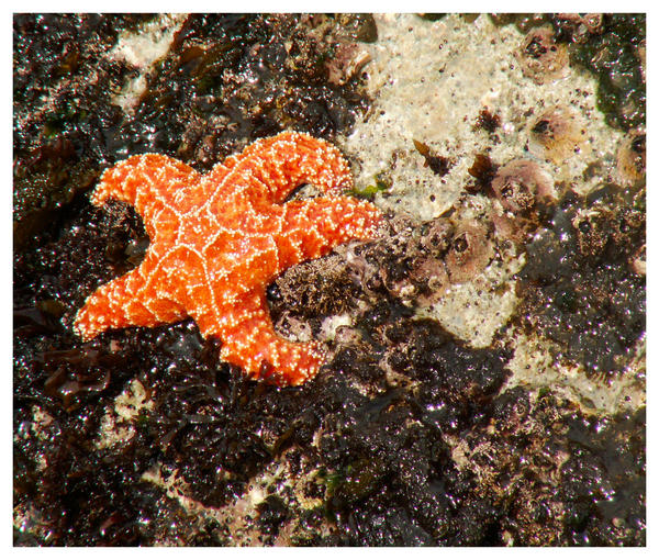 Starfish by jeepgurl8204