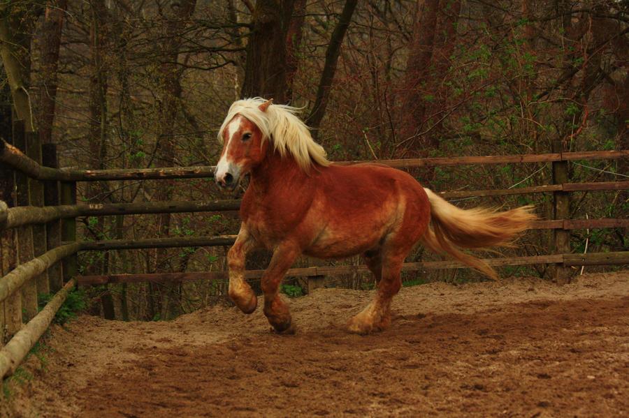 Horse Stock 62 by xxDark-Wolfxx