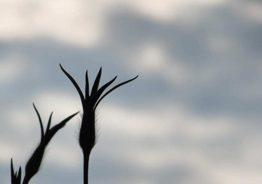 Silhouette by BadButNotSad