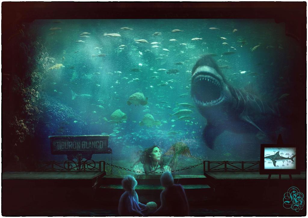 Tiburon / Shark
