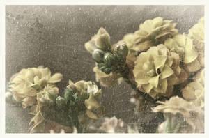 flowers (photomanipulation)