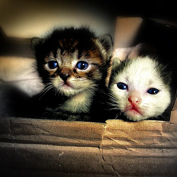 Kittens by J-Ro-20