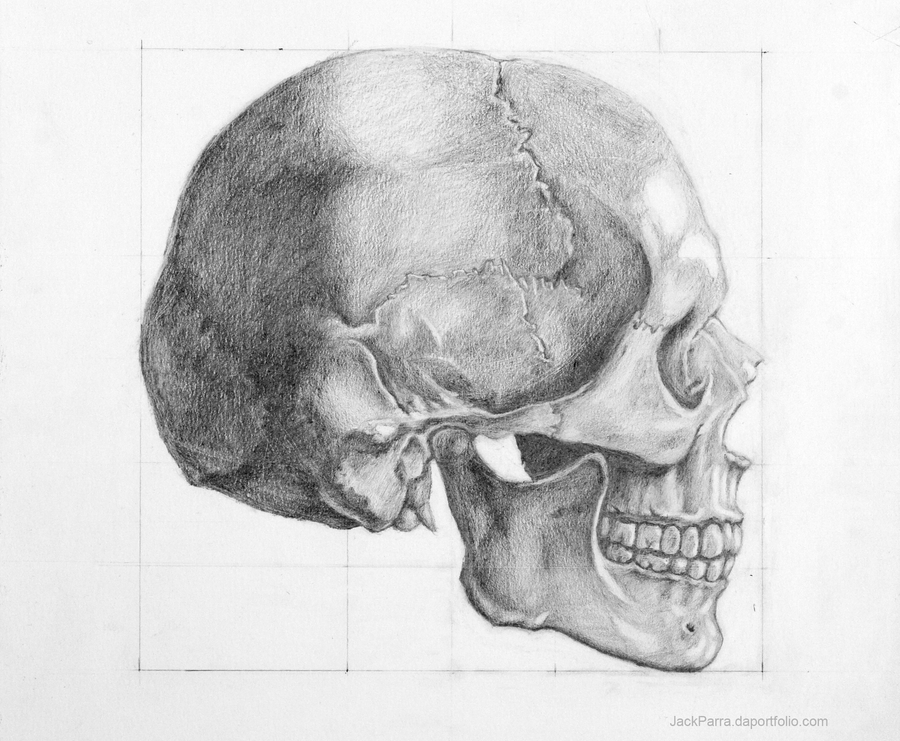This is a graphic of Dashing Skull Profile Drawing