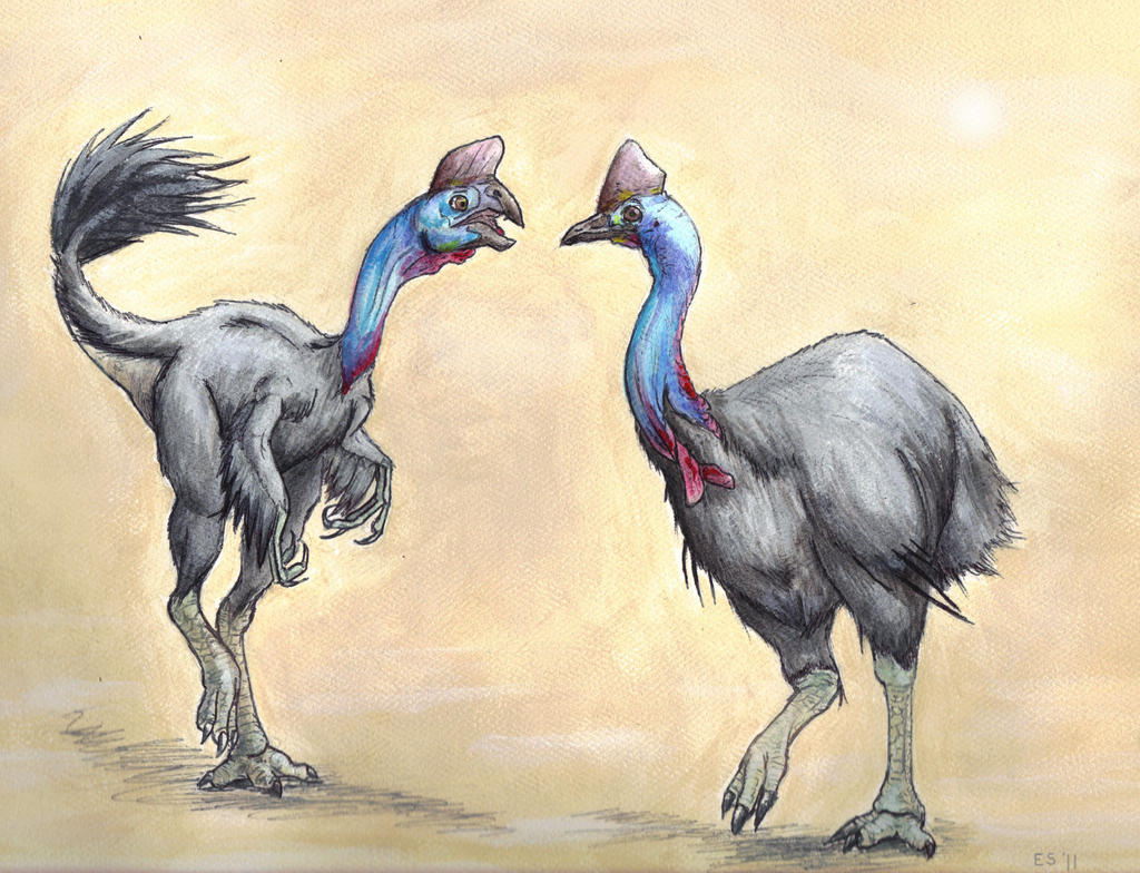 The Oviraptor and Cassowary by deathdragon111 on deviantART - photo#34