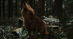 Jacob Black Howls(help for Suzaku howl in contest)