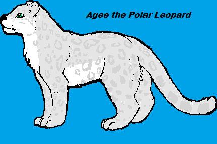 Agee the Polar Leopard
