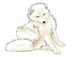 Foxy Foxy by MelvisMD