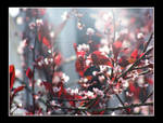 Red Spring by Emiry214