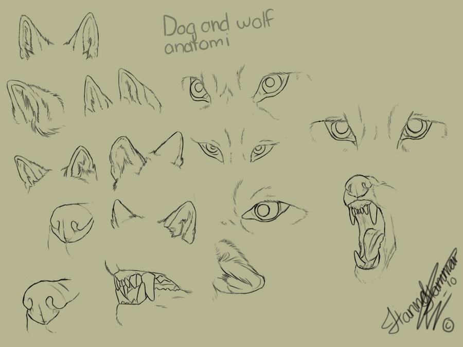 Wolf Ear Anatomy