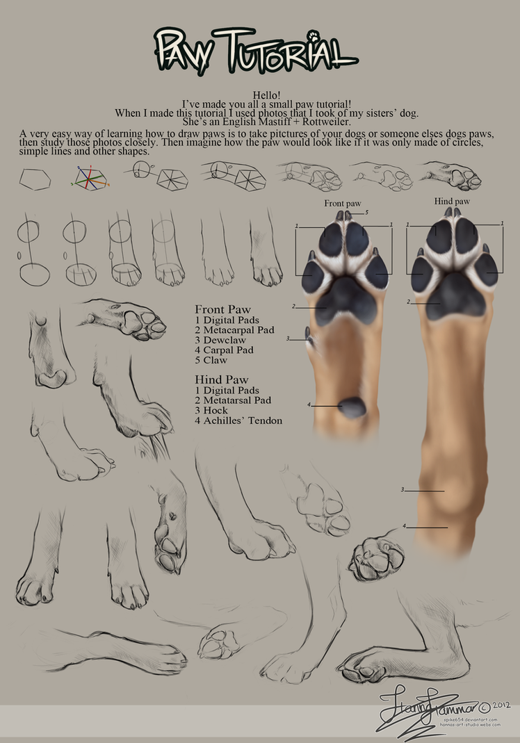 Paw Tutorial 2012 by HannasArtStudio on DeviantArt