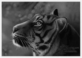Tiger Charcoal Drawing by HannasArtStudio