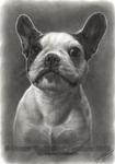 Siri - Graphite Pet Portrait