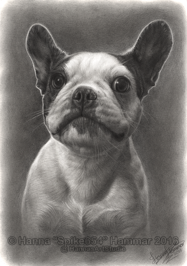 Siri - Graphite Pet Portrait by HannasArtStudio