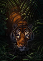 Bengal Tiger. Creative title is creative - PRINTS!