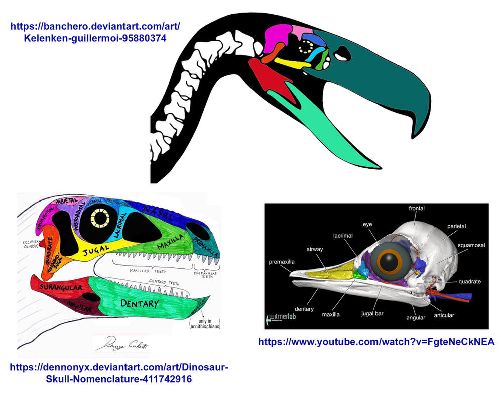 Terror Bird Skull Anatomy / Is it right? by codylake on DeviantArt