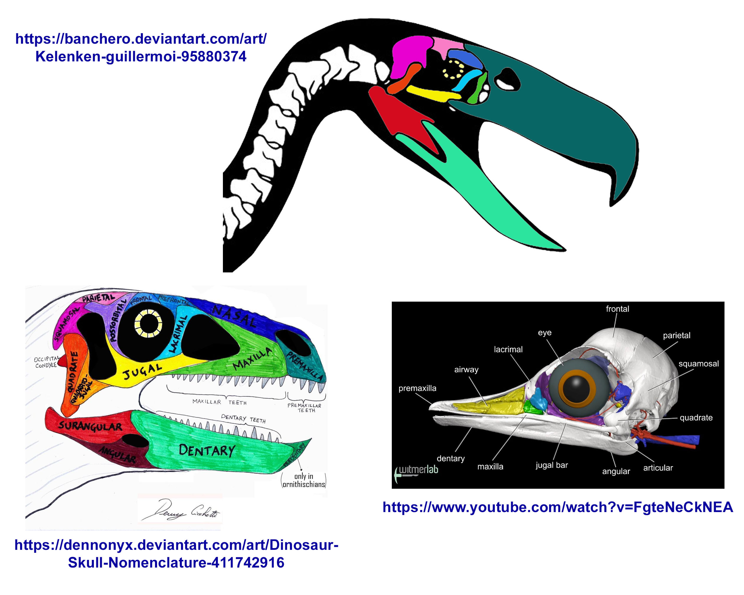 Terror Bird Skull Anatomy / Is it right? by codylake on DeviantArt