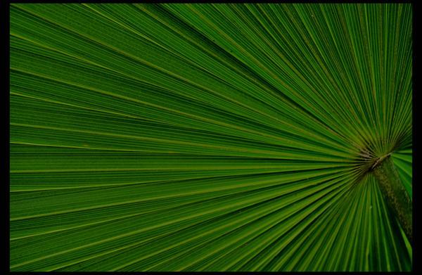 Verde by darkmirror29