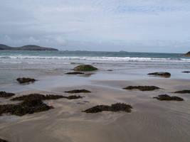 Seaweed by Iandbolt