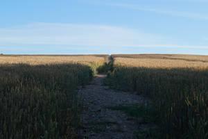 Chelsworth Walks by Iandbolt