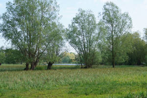 Landscape with lake by Iandbolt