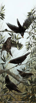 Blackbirds and olive branches