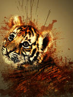 Bengal by Momez