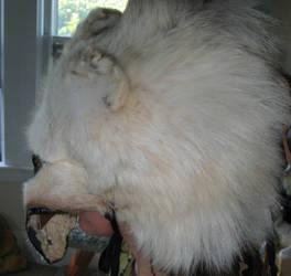 Shamanic wolf headdress 2 by lupagreenwolf