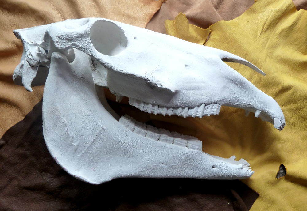 Big ol\' horse skull (for sale) by lupagreenwolf on DeviantArt