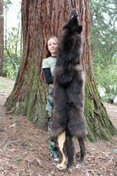 A Wolf - Bear Hybrid?!