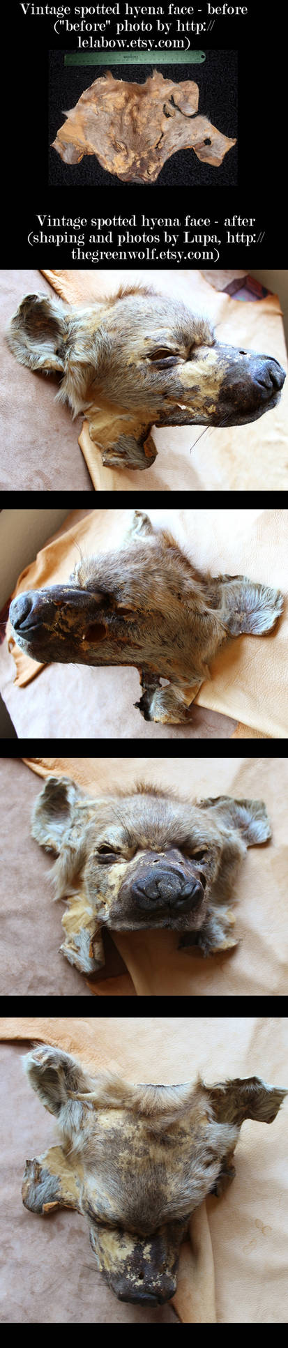 Hyena face reshaping CLICK TO EMBIGGEN