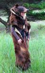 Cinnamon Black Bear Headdress