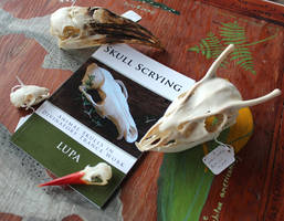 Get Your Copy of Skull Scrying Here! by lupagreenwolf