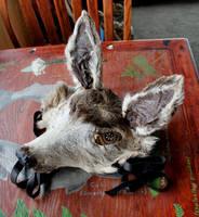 Mule Deer Headdress by lupagreenwolf