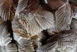 Pheasant Wings, Fur and More FS!