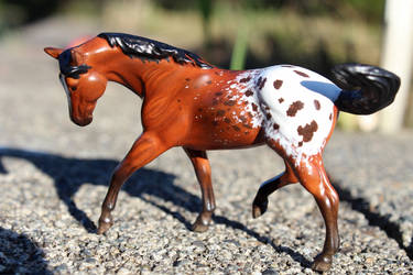 Phoenix - Custom Breyer Appaloosa Stablemate by lupagreenwolf