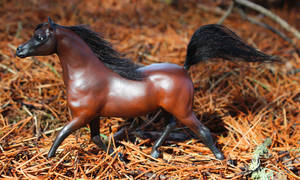 Zephyr - Breyer Custom LB/PP Arabian by lupagreenwolf