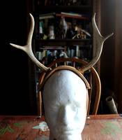 Deer Antler Headbands! by lupagreenwolf