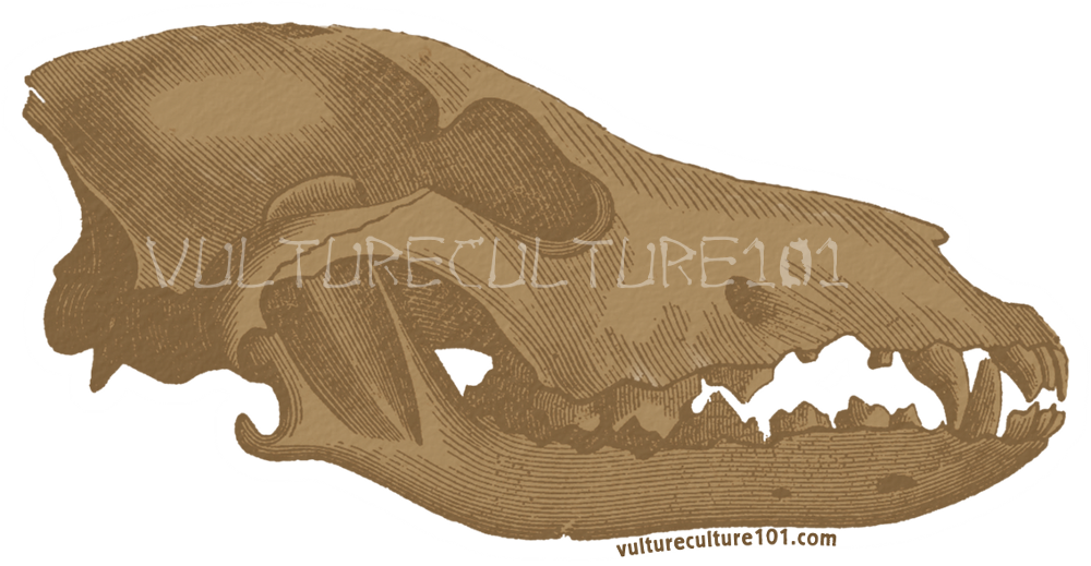 Vulture Culture 101 Stickers by lupagreenwolf