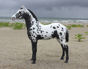 Crow Tracks - Custom Breyer Appaloosa Foal