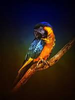 Birdy by barbranz