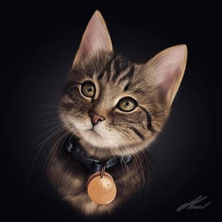 Cat Portrait by ArtistMaral