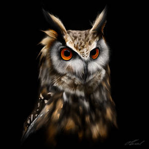 Wise Owl Portrait