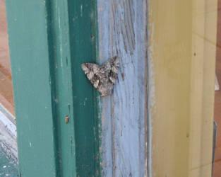 Moth by ladybard96