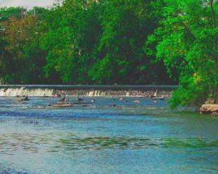 Group Swim by ladybard96