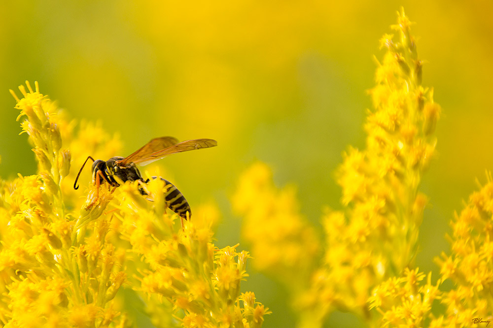 One Last Pollination by sequential