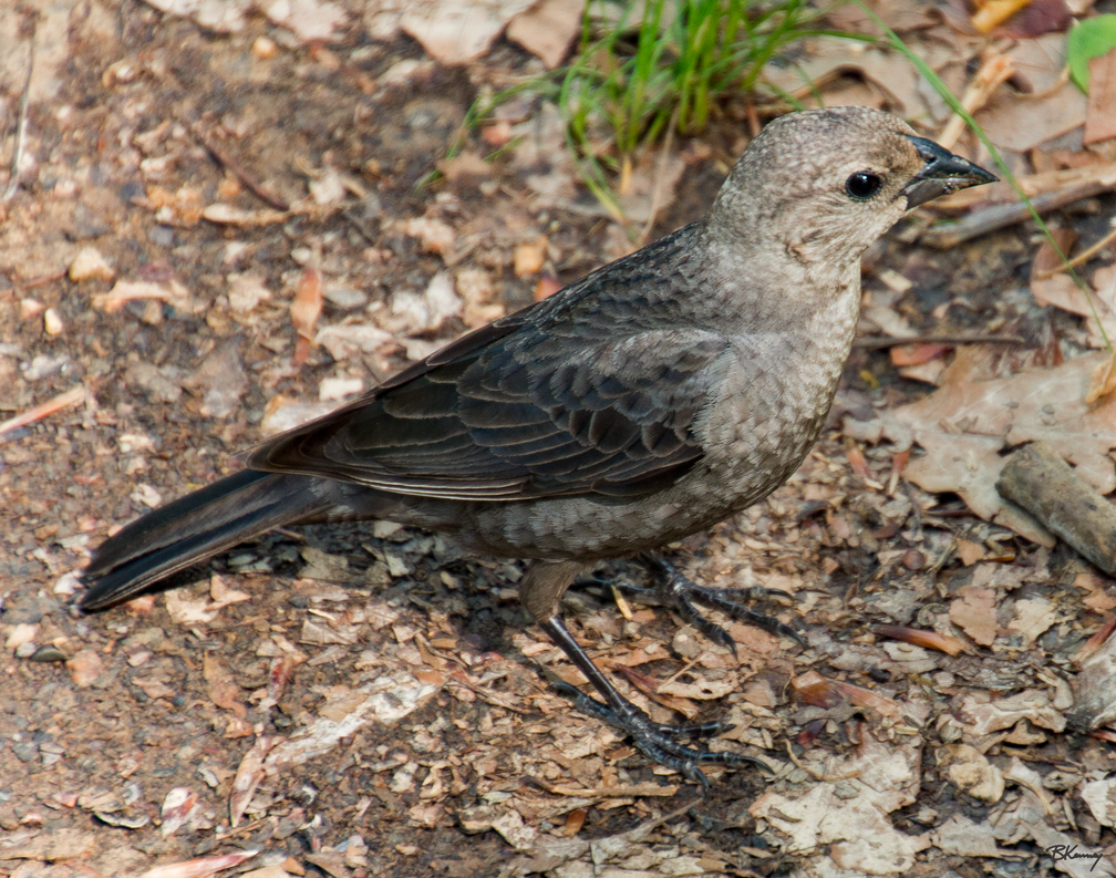 Beggar Bird by sequential
