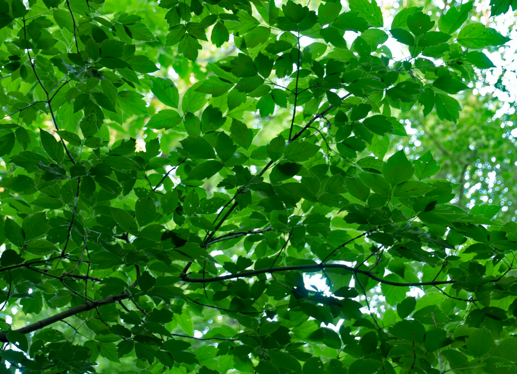 Through the Canopy by sequential
